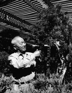 F. W. Yoshimura, son of the founder of Mission Nursery and then, after release from Gila River, founder of the San Gabriel Nursery in San Gabriel. Image courtesy of Descanso Gardens.